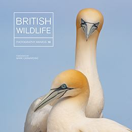 British Wildlife Photography Awards 10