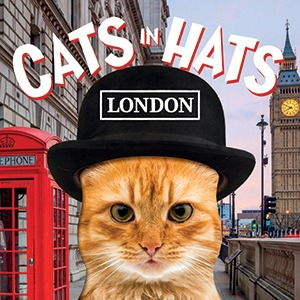 CATS in HATS London